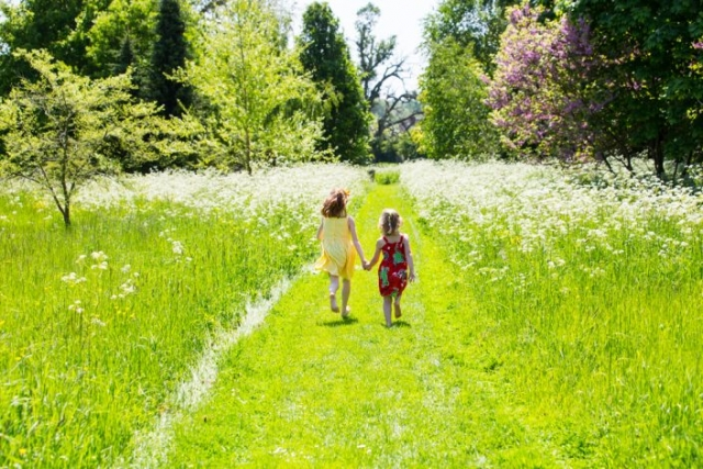 Garden Photography, Horticultural photography, waterperry garden, Oxfordshire garden photography