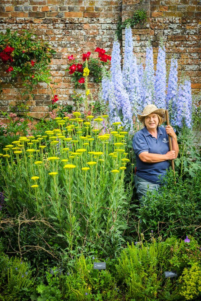 Waterperry Gardens, Horticulture, gardener in herbaceous border