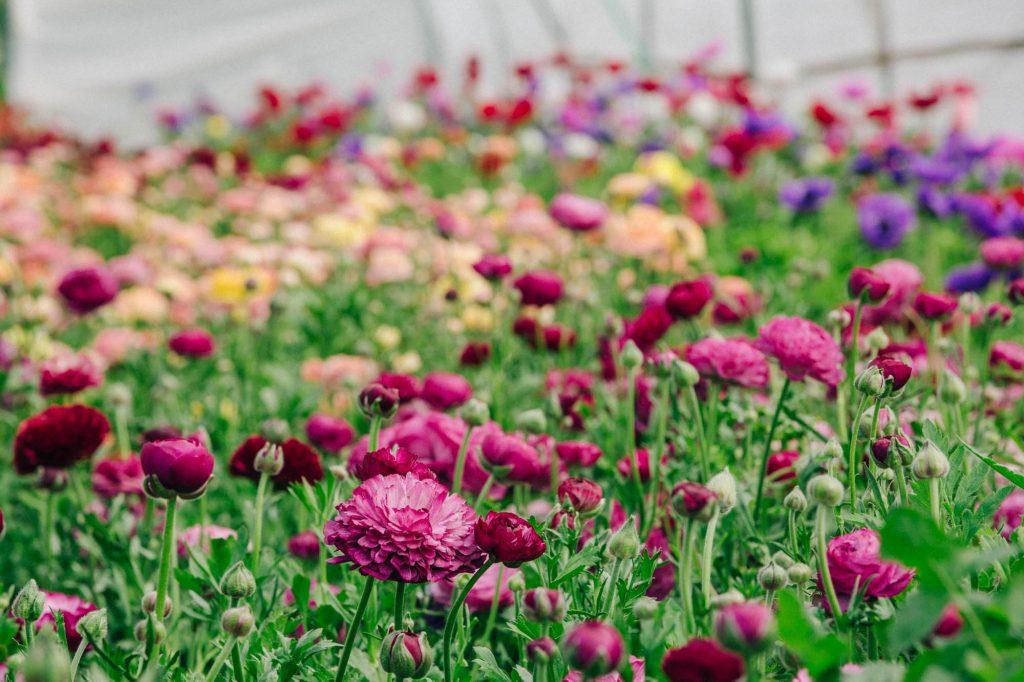 Green & Gorgeous, Cutting Garden, Wedding Floristry