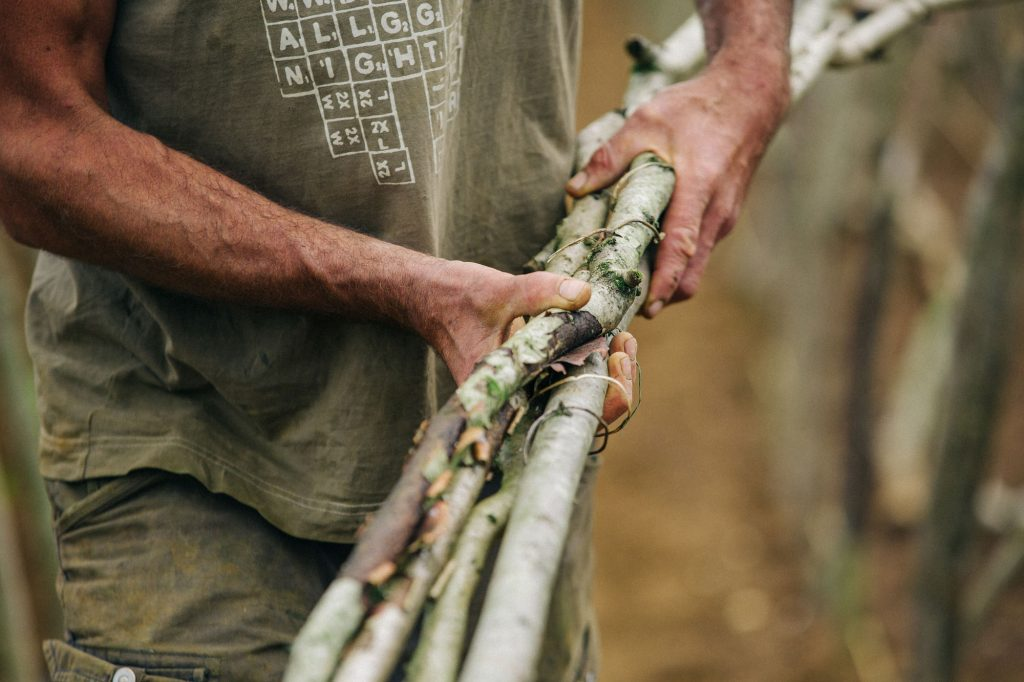 Garden Photography, Horticulture, Sandy Lane Farm