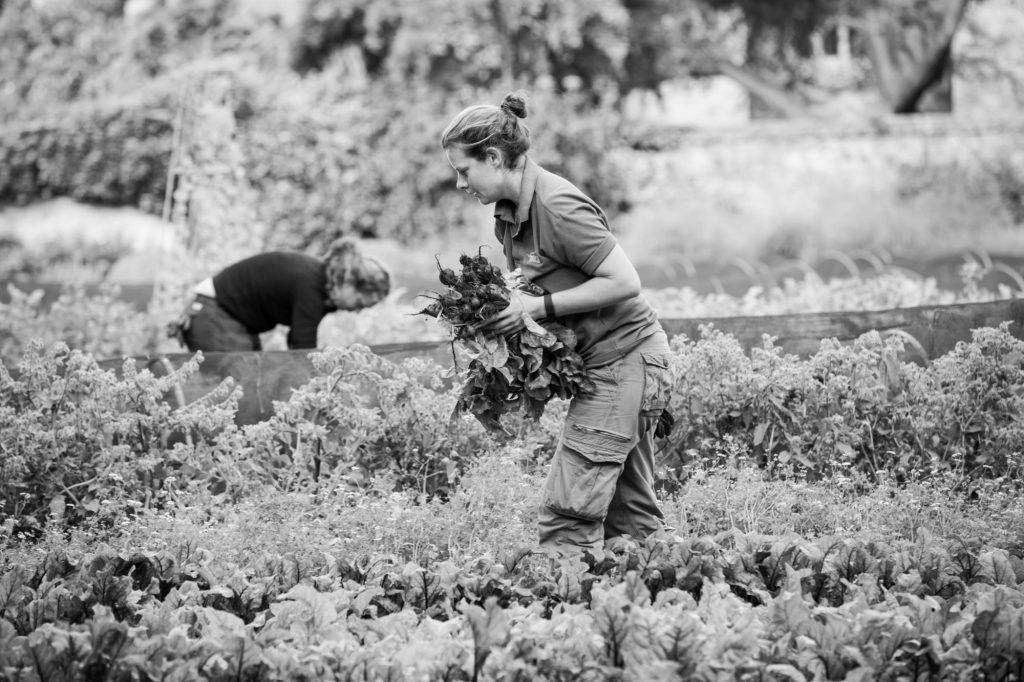Garden Photography, Horticulture