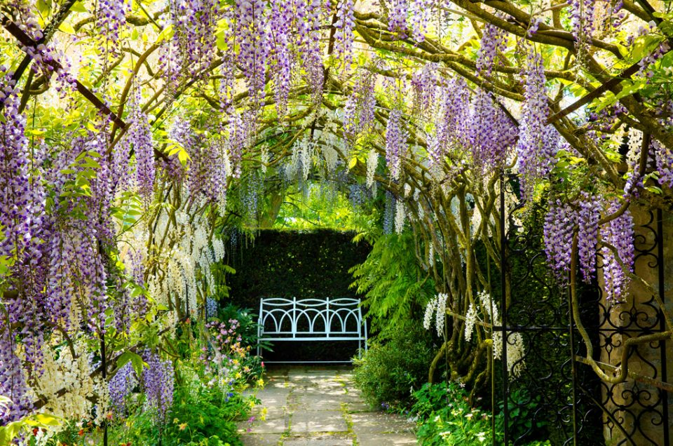Garden Photography Course