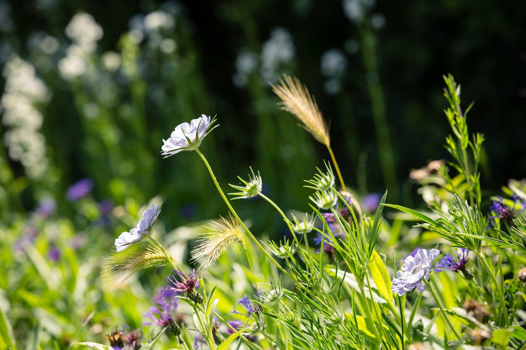 Green & Gorgeous, British Grown Flowers, Horticultural Photography