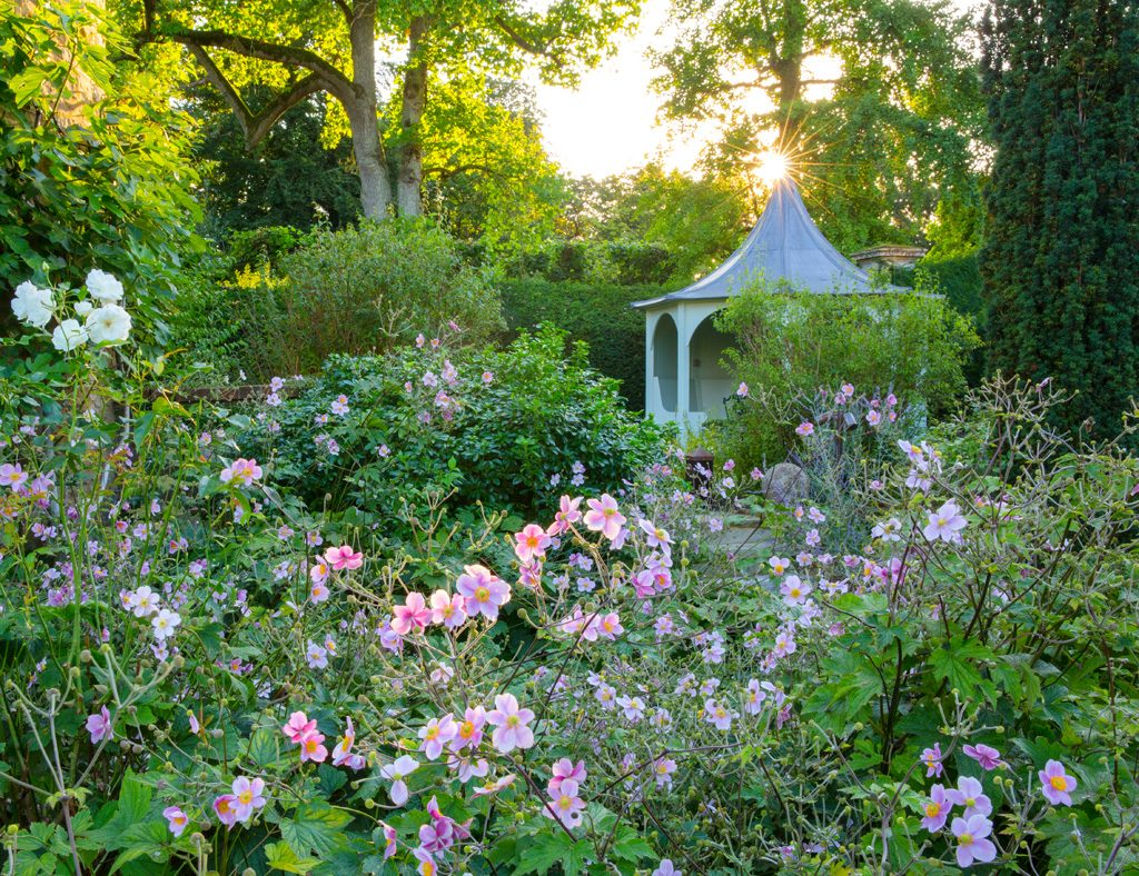 Le Manoir Japanese Anemones Garden Photography