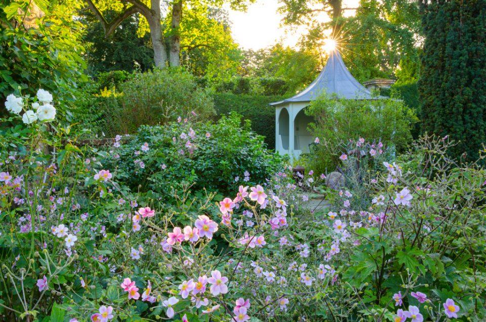Le Manoir Japanese Anemones Garden Photography
